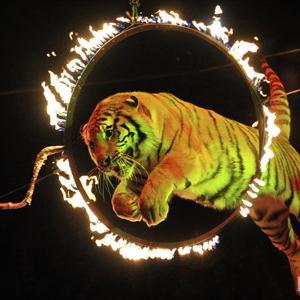 Цирки Буланаша